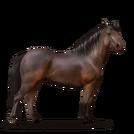 Quarter Pony Dunkelbrauner