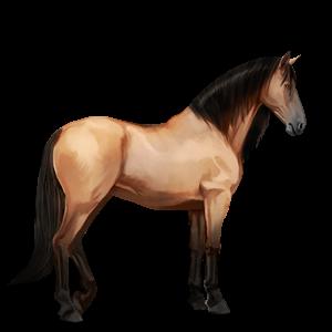 Datei:Falbe, Pferd.png