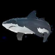 Ausgrabung Hai