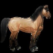 Mustang Falbe Alt