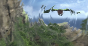 Shadowwingroar