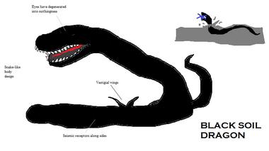 Black Soil Dragon