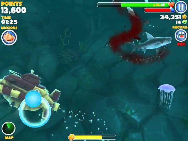 File:Jellyfish2.jpeg