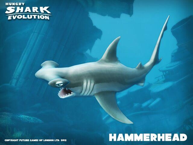 File:Hammerhead banner.jpg