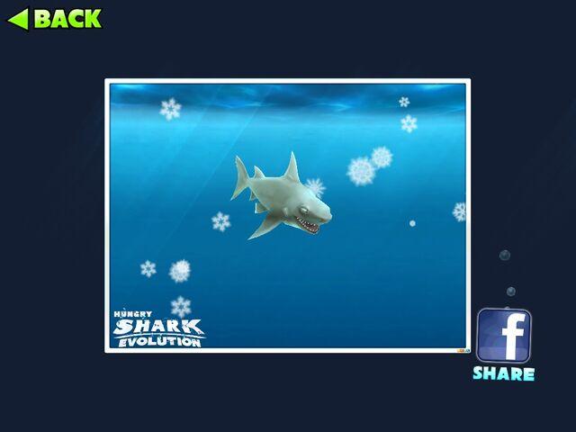 File:Reefsharkcamera.jpg