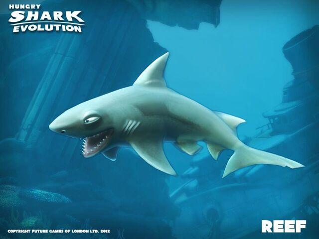 File:Reef Shark.jpg