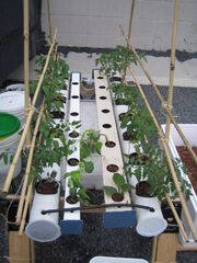 Solar DFT with Plants