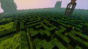 Spider Maze