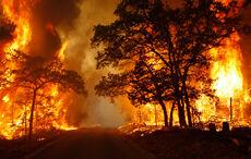Wildfire (3)