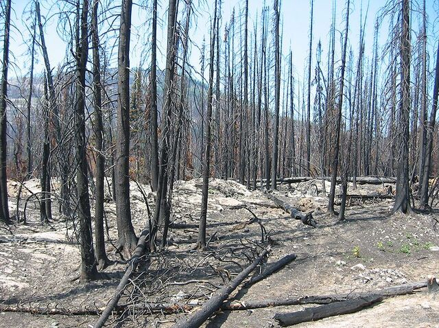 File:Forest fire aftermath.jpg