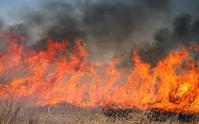 File:Wildfire (1).jpg