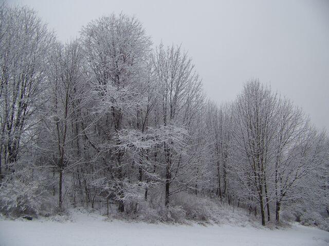 File:Winter Storm December 2007.jpg
