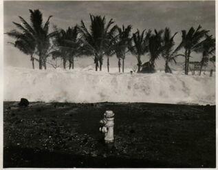 Trivinnia tsunami