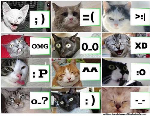 File:Lolcat-emoticons.jpg