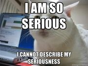 Serious cat meme 1