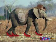 Gibbyonelephant