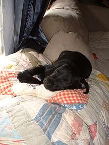 File:220px-Hemi asleep.jpg