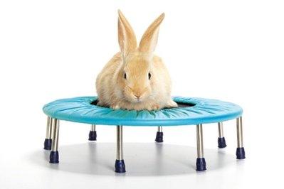 File:Bunny.jpeg