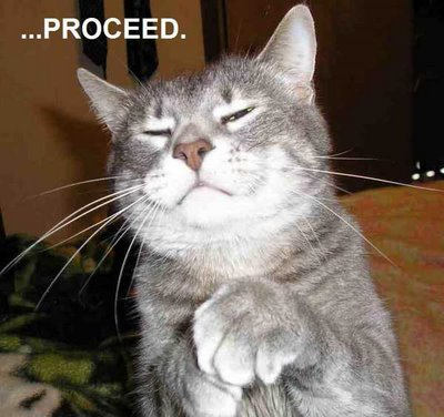 File:Funny Cat Proceed.jpg