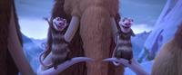 Hi Buck - Crash and Eddie on Ellie's tusk