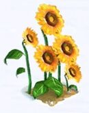 Sunfloers2
