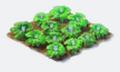 Flowersgreen