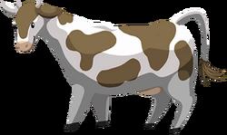 Cow chocolate