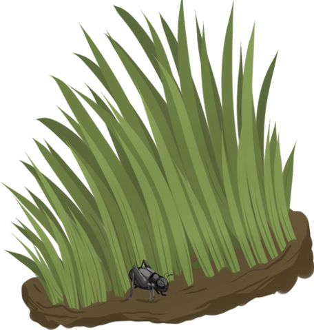 File:Grass thumb.png