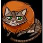 Unamused Tabby Cat
