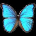 File:Morpho-Godarti-icon.png
