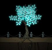Mocoa tree