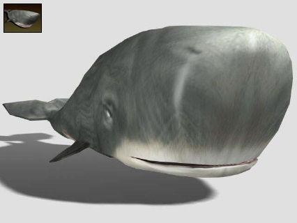 File:Spermwhale.jpg
