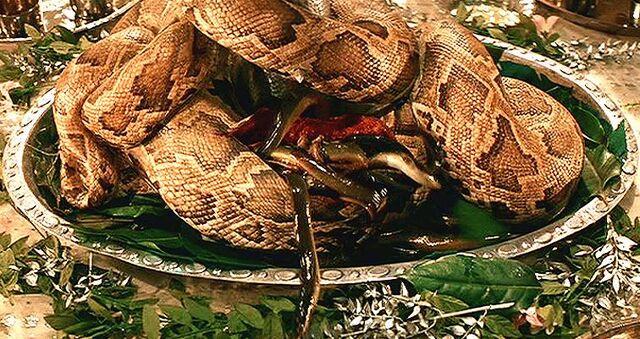 File:SnakeSurprise.jpg