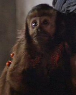 ファイル:Monkey.jpg