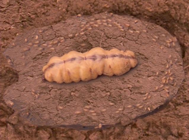 File:Tasty termite.jpg