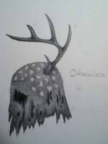 File:Odocoileus.jpg