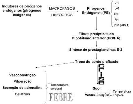Controle da temperatura corporal e fisiopatia da dor 10