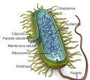 Resistência Bacteriana a Antibióticos