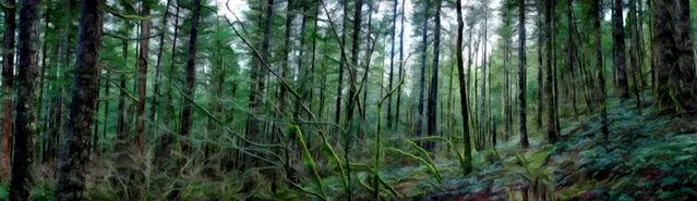 File:Banner---forest1.jpg