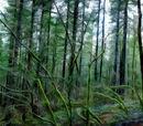 Wildeburn Forest