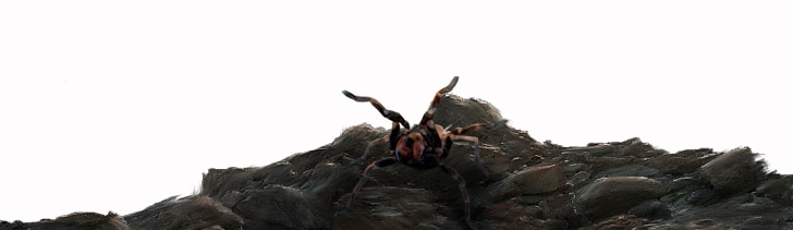 Npc-spider2