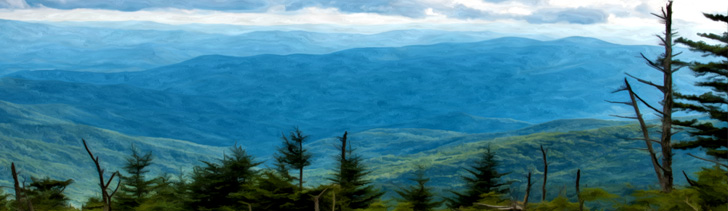 Banner---forest4