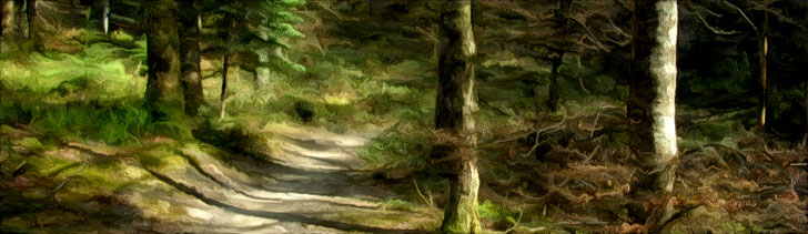 Banner---forest-path1