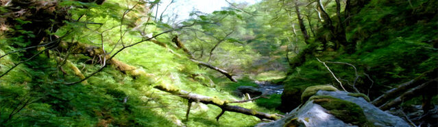File:Banner---swamp2.jpg