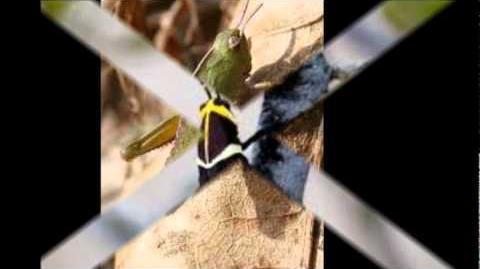 My Movie Grasshopper life Cycle Final.wmv