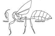 Insectbodyparts