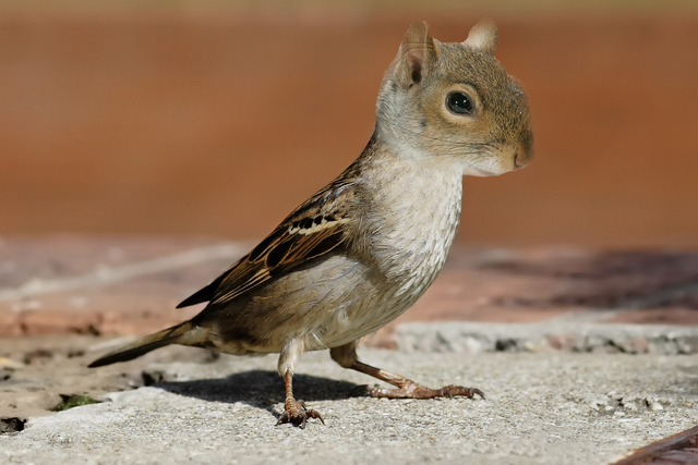 File:Squirrel Bird.png