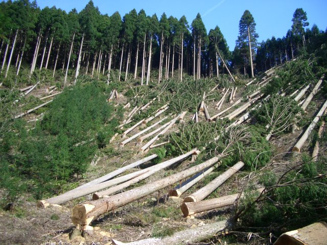 File:Deforestation.jpg