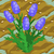 Lavender 70