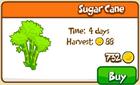 Sugar Cane Store